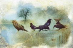 crows_1200w