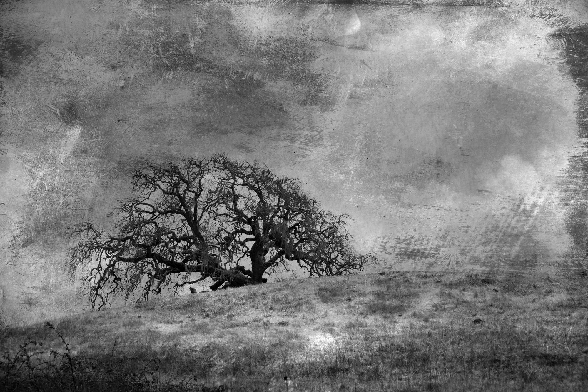 tree-canyoncreek