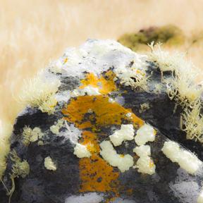 fungusrock